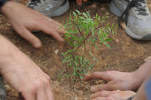 Project Leket Outreach & Tree Planting